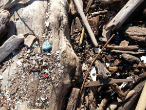 Pieces of multi-colored trash accumulate on a beached log.